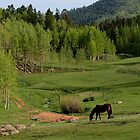 GRAZING IN THE MOUNTAINS by Cindi Smith