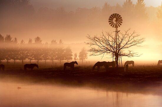 Winter fog at Richomond 2 by Alex Lau