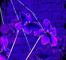 Violaceous by Joanna  Smail