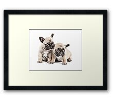 Frenchie Puppy Pals Framed Print