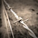 Barbed Wire Fence by Bailey Designs