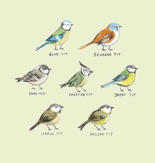 The Tit Family by Sophie Corrigan