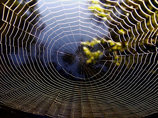 'River through the web' by Jayne Healy