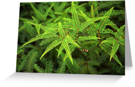 Fern #1 by Andrew Brown