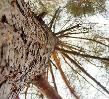 Bottom View of Pine Tree 2 by AnnArtshock