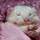 Snoozing Ferret by Lance Leopold
