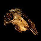 Skull by Ben Herman