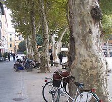 Lucca, carless city by RosemaryO