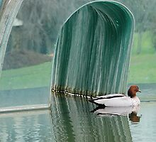 Wood Duck on Mirrored Pond by Michael Tapping