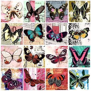 Butterflies 1 by Carolynne