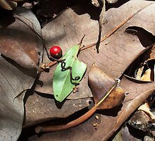 Red berry-green leaf by sally ebringer