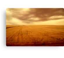 Amber field 1 Canvas Print