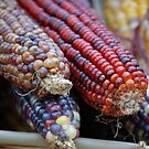 Indian Corn Tips by Carmen Mandel-Cesáreo