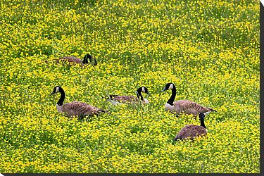 Springtime Gathering by Gary L   Suddath