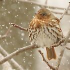 Fox Sparrow  by lorilee