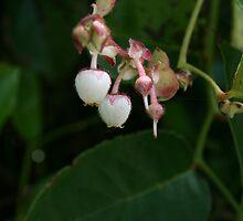 salal berry by marina janzen