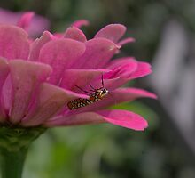 Upside Down Bug by Andrew Heimer