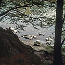 The edge of Rydal Water Rydal Lake District England 198405200011 by Fred Mitchell