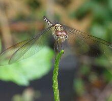 Dragonfly by chellej