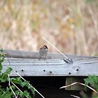 Cheerful Chipping Sparrow by WalnutHill