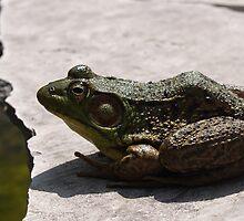 Frogger by Brandy
