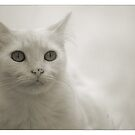 Infrared Kitty by shadows
