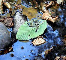 Disintegrating Leaf by Chris Gudger