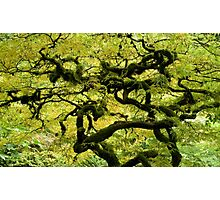 Gnarled!! Photographic Print