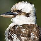 Kookaburra Profile by mncphotography