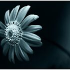 Blue Flower by Corey  Brown
