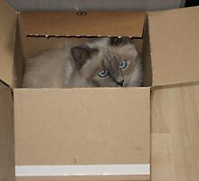 Pearl Birman in the box  by shelagh1312