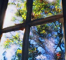 Window to the Soul  by Susan Zohn