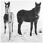 horses in snow by Robert Elfferich