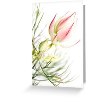 Protea sugar and spice Greeting Card