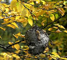 Hornet's Nest II by Gary L   Suddath