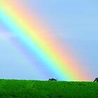 Rainbow  by Caroline Scott