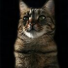 Elegant Cat Portrait by LunarLioness
