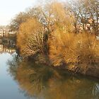 River view, February 07 by Frances Knight