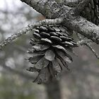 Pinecone by Martha Medford