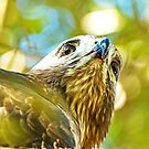 Red Tailed Hawk Closeup by imagetj