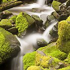 Rain Forest - Sol Duc Falls Trail (9145) by Barry L White
