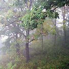 Foggy Shenandoah Mountain Top by Gary L   Suddath