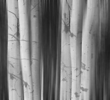 Aspen Tree Colonies Dreaming BW by Bo Insogna