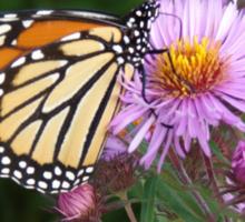 Butterfly on Purple Sticker