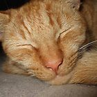 Roobarb, my cat, sleeping by davethewave