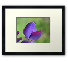 Purple Lupin Close Up Framed Print