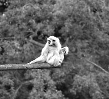 MONKEY WATCH by TANYA WILLIAMS