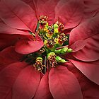 Poinsettia Time Again by Monnie Ryan