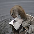 Preening Duck by Debra LINKEVICS