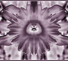 Daffodil by Rachael Taylor